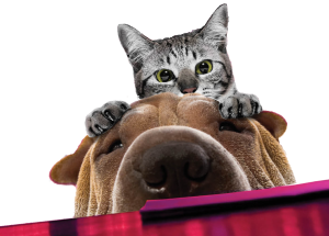 doghouse kitty and dog